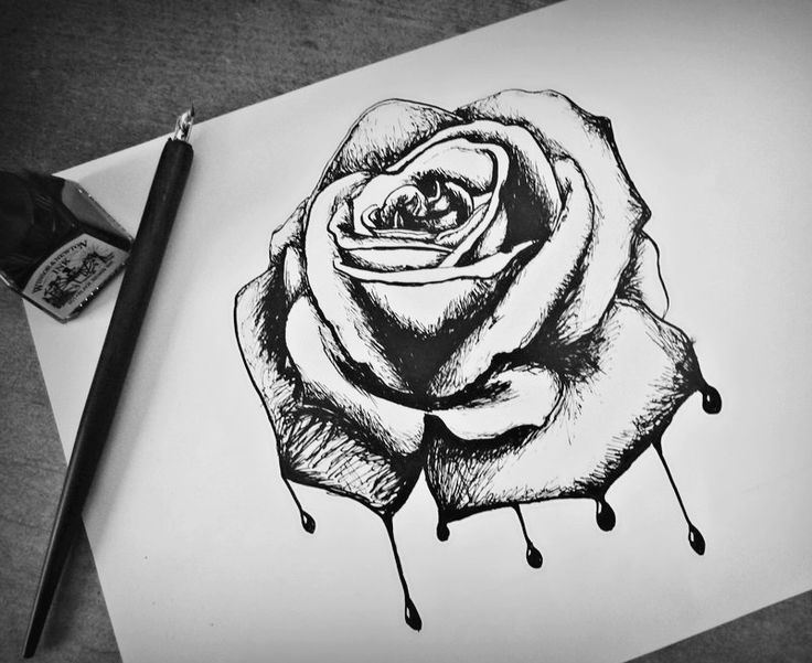 12 best rose images on Pinterest Drawings Rose drawings and