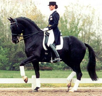"""A breath of fresh air. A loop in the reins, nicely rounded and well underneath himself. A big difference from rollkur """"trained"""" horses.    www.limestonestables.com"""