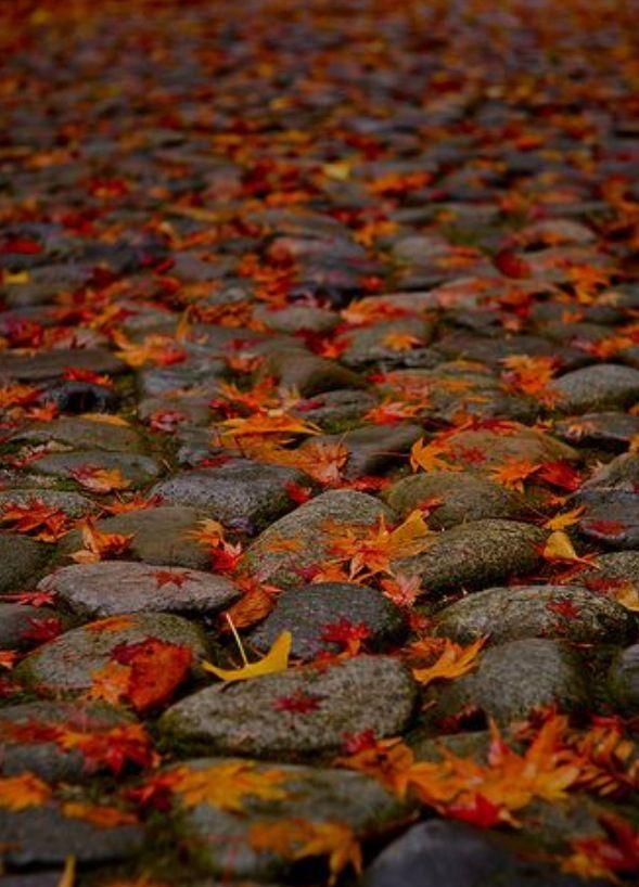 Fall rocks