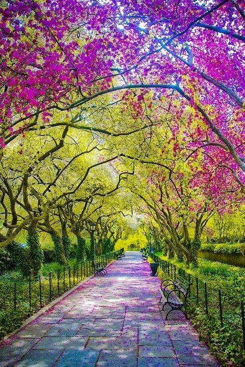 Spring in Central Park ~ New York City
