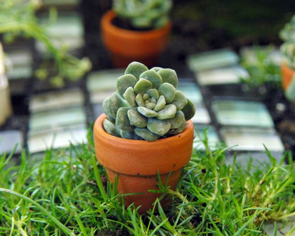 four-pack of these small pots from Michael's for less than $1.50.  Add a bit of soil, a small clipping from a succulent, and a nail glued on the bottom (to keep the pot in place), and there you have it!!  The most adorable little fairy pot on the planet!!