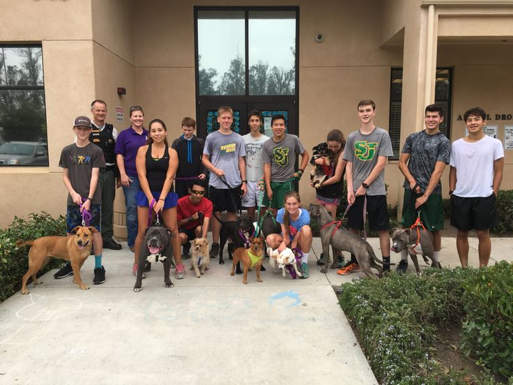 Best cross country practice ever? Shelter dogs join high school cross country team for an incredibly adorable run