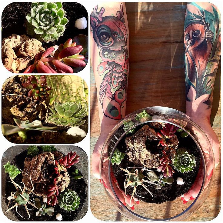 Another DIY succulent terrarium project. Loving my new hobby  #succulent #succulents #succulentterrarium #gardening #hobby #diy #doityourself #love #cactus #tattoos #tattooed #sun #barcelona #masterpiecetattoos #inked #tattooed