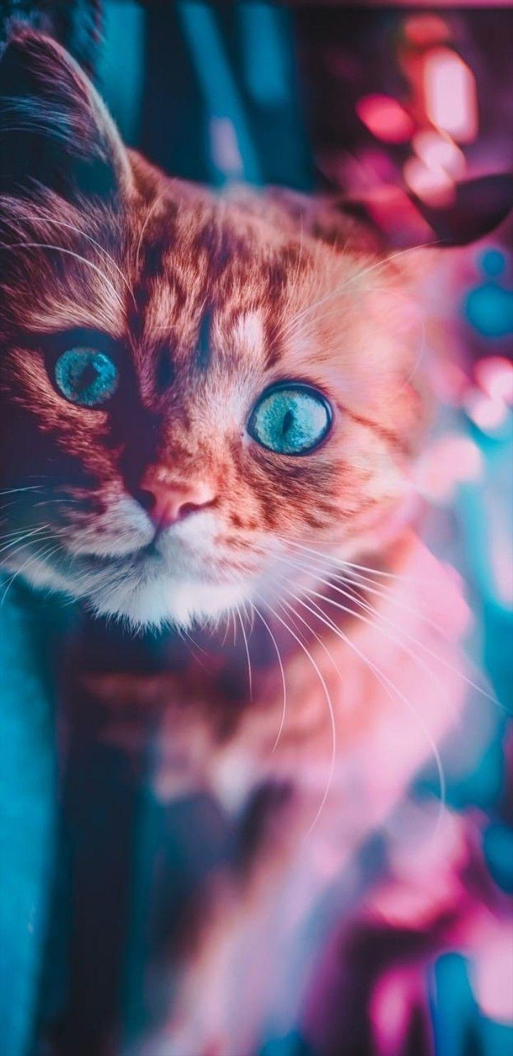 Iphone Wallpaper Animals 505 En 2020 Avec Images Beaux Chats Photographie De Chat