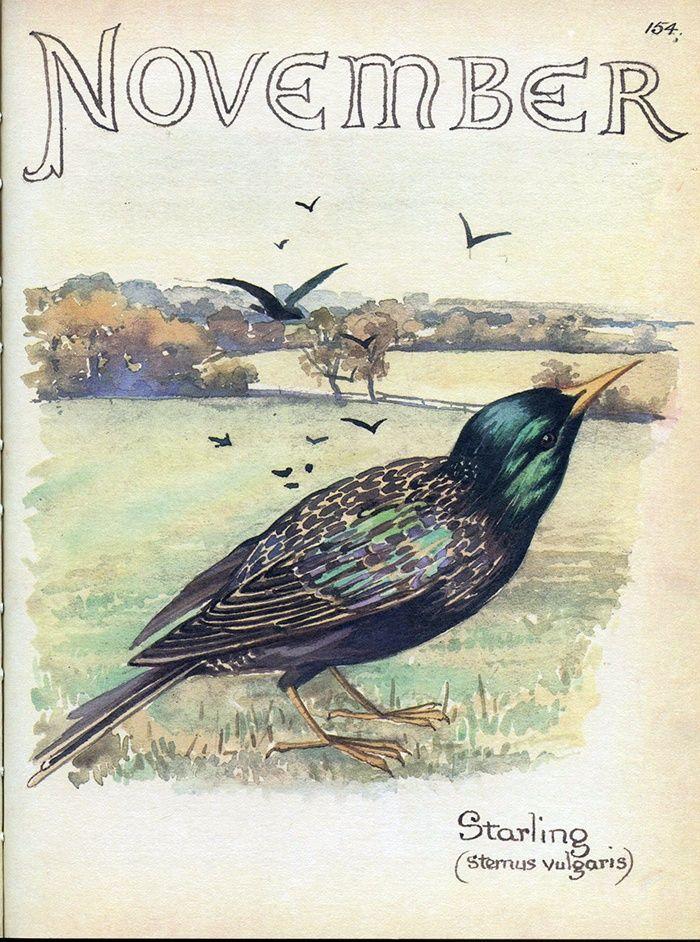 November by Edith Holden