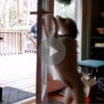 dog slams door, dog closes door, dog doing human things, dog hates baths, dog doesn't like baths, dog avoids bath, dog hates bathtime, dog slams door to avoid bath, dog closes door to avoid bath, funny bath dog, funny dog bath, dog closes door to avoid bath, clever dog, smart dog, funny dog, funny dogs, happy dog, dog happy, funny animals, funny animal, funny animal videos, funny animal video, funny videos, funny video, funny vids, funny vid, funny dog, funny dogs, dog, dogs, best dog ever…