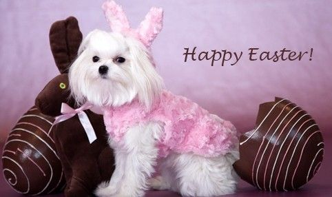 Filling your dog's Easter basket with the perfect toys