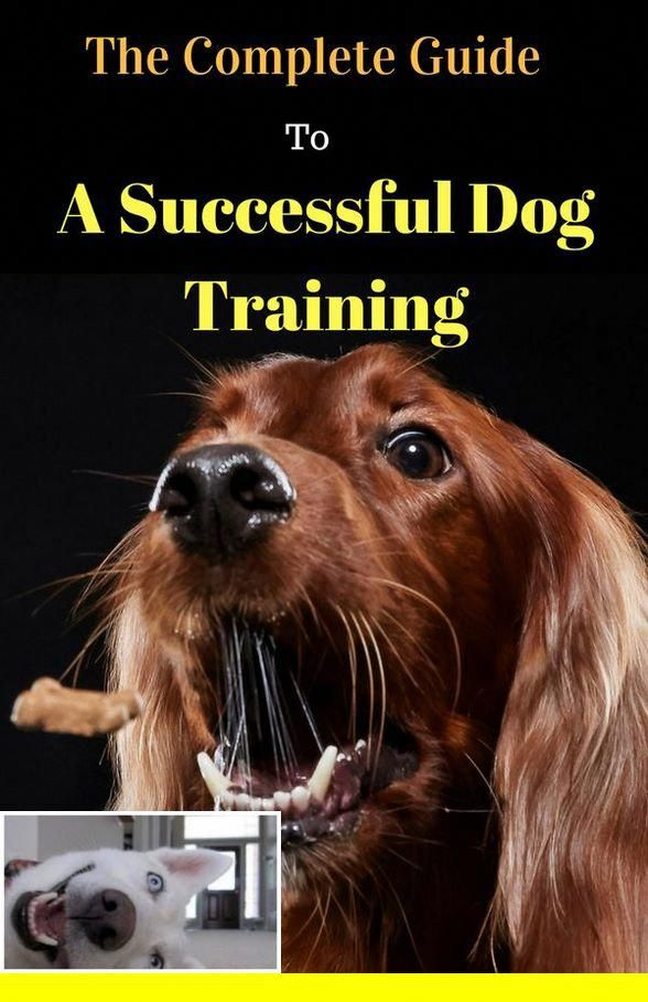 1 Dog Whistle Training Tips And Dog Breed Cane Corso Check