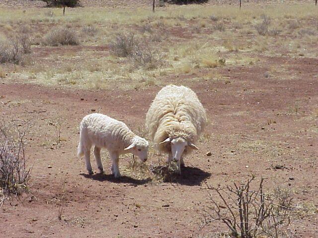 f471f0f3547ec05f7ac6677657d70a76 - Is Sheep Manure Good For Vegetable Gardens