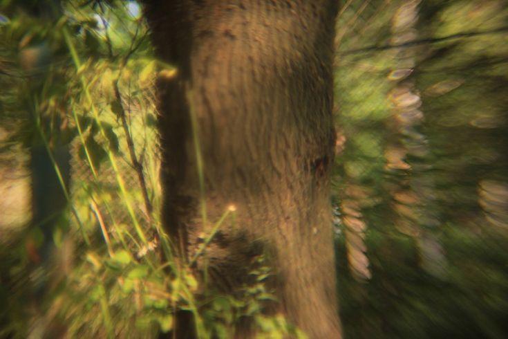 Пробная съемка, с удалением(выкручиванием), задней оптической линзы.. Пример тестовой фотографии, сделанной объективом Rayxar DE Oude Delft 50 mm f/ 0.75 и фотоаппаратом Canon EOS-M