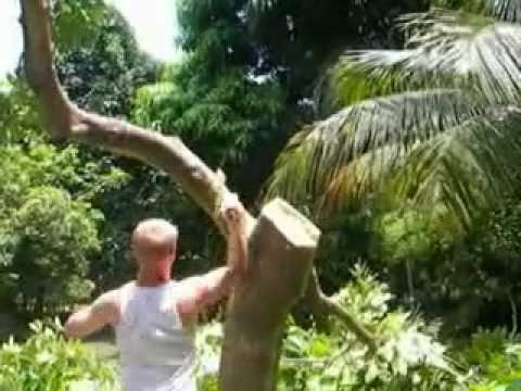 madwhitejamaican VS ackee tree - YouTube