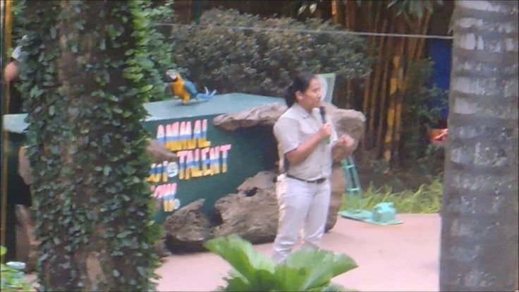 Animal Got Talent Show at Davao Crocodile Park
