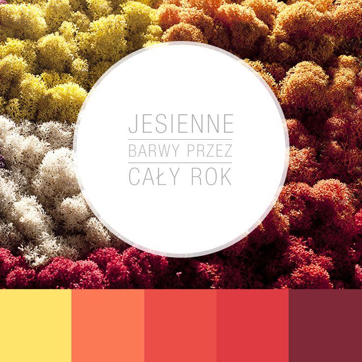 #jesień #barwyjesieni #kolory #kolaż #mech #mosstrend @mosstrend #banditdesign
