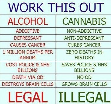 49 best images about The Facts of Cannabis on Pinterest