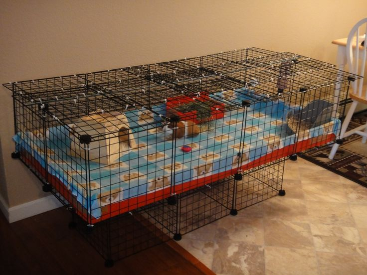 2x4 cage with kitty proof lid guinea pig cage photos