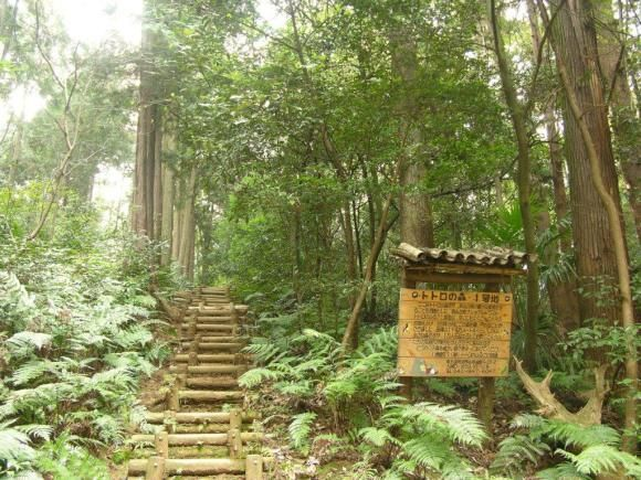 Spring walking event provides guided tour around Totoro forest loved by Hayao Miyazaki