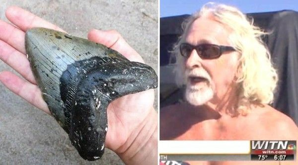 Surfer Dude Finds Tooth Of Largest Shark Ever To Live