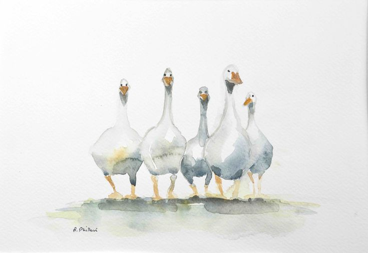 Five Sisters: Five sisters Description: Original watercolour painting of five geese. Width: 29cm Height: 21cm Price: 80 Options… #IrishArt