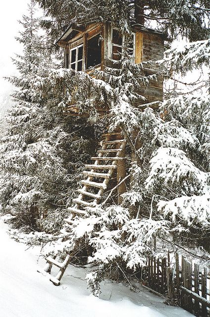 tree house in the snow...That ladder would be tricky but wow ... a good book and some hot chocolate! Winter Snow, Winter Trees, Tree Houses, Winter Wonderland, Treehouse, Green Life, Trees House, Wintersnow, Places