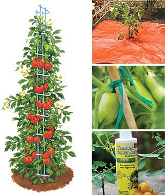 The only way to handle those Jersey tomato plants! Ultimate Tomato Growers Kit, Gardening Supplies and Garden Tools at Burpee.com