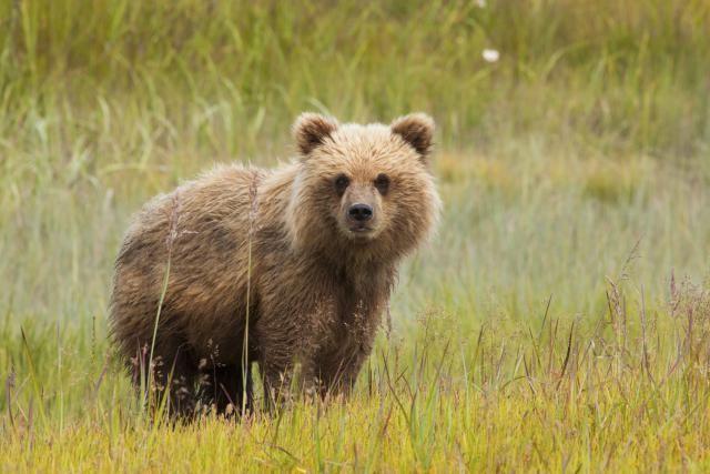 Internships in Wildlife Conservation