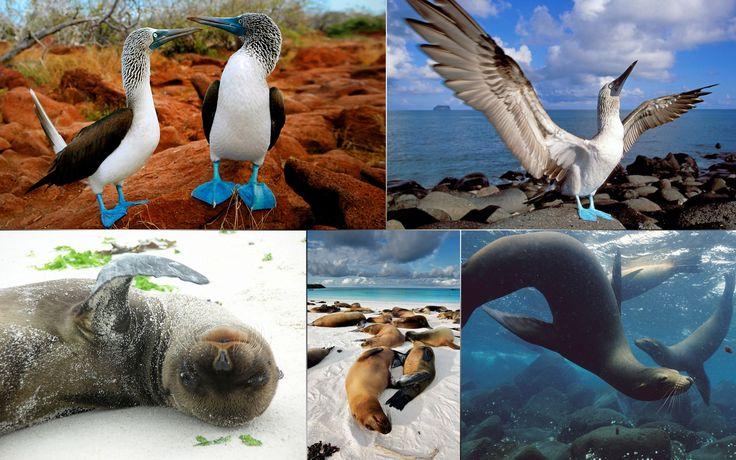 Life on galapagos