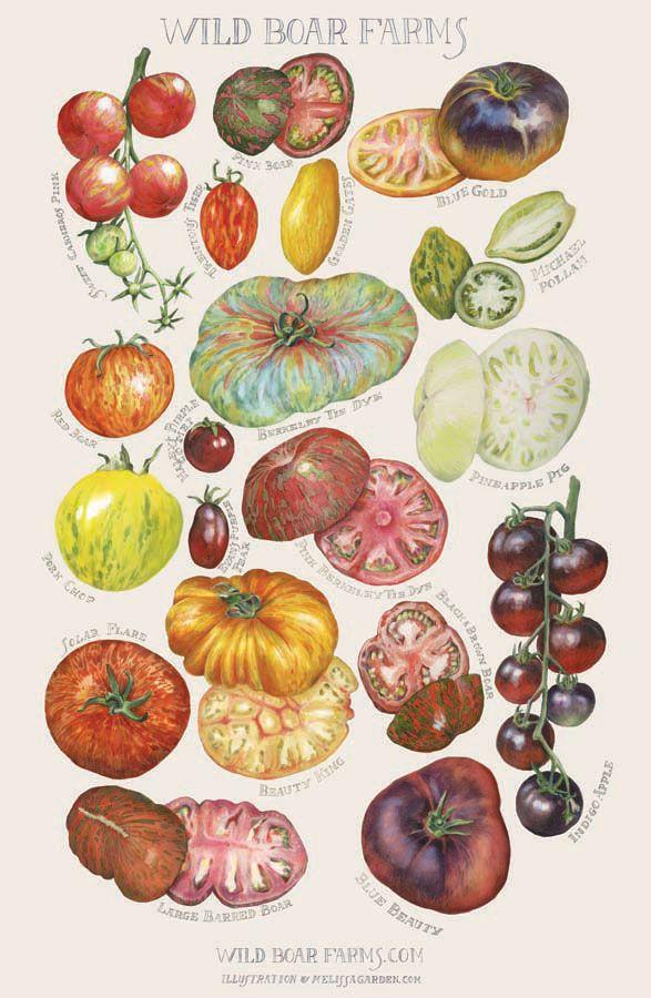Wild Boar Farms Heirloom Tomatoes Biodiversity Study