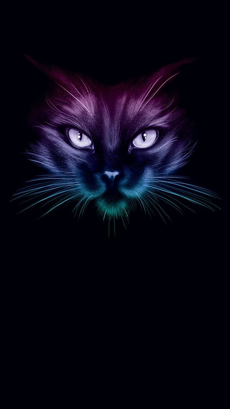 From The Darkness Black Cat Art Cat Colors Neon Cat