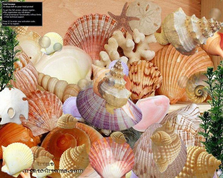 147 best seashells images on sea shells sea glass and