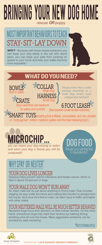 Bringing Your New Dog Home, Rescue Or Puppy - Tipsographic