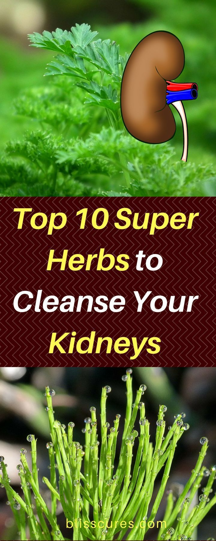 Top 10 Super Herbs to Cleanse Your Kidneys - In this article, you will find 10 herbs to cleanse your kidney and how to make and try those herbs