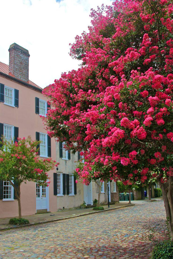 Rua arborizada e com flores em  Charleston, estado da Carolina do Sul, USA.