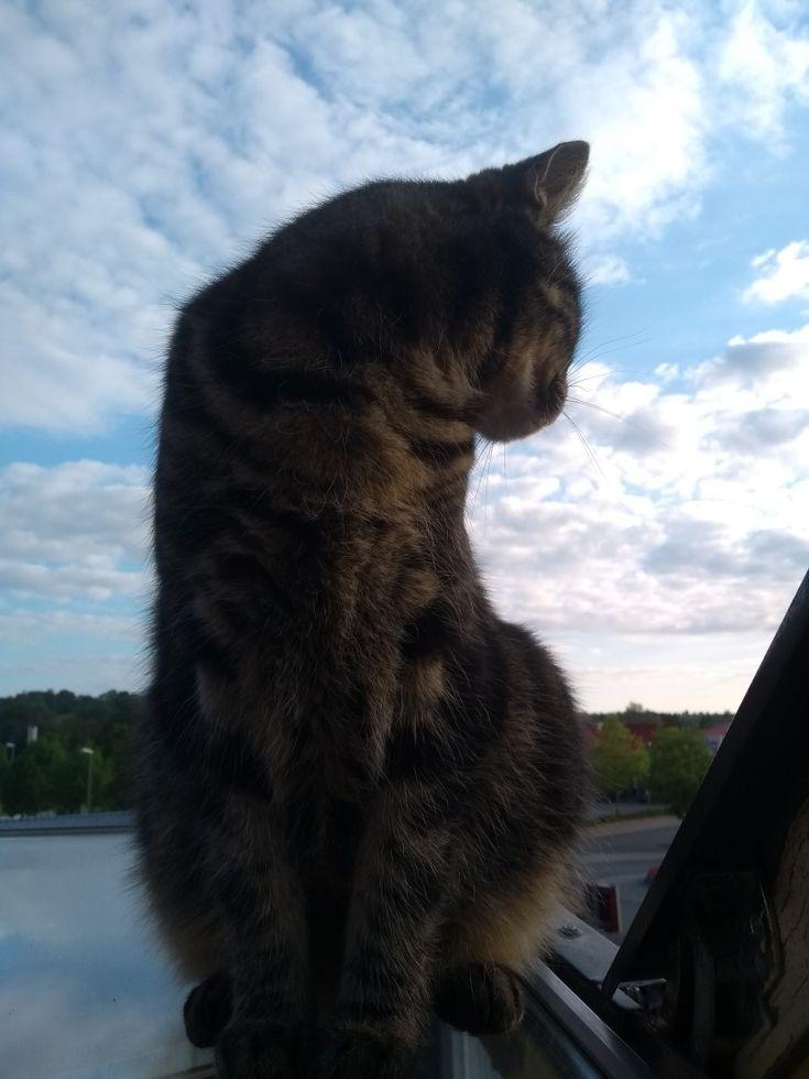 süßer kater  katzen kater