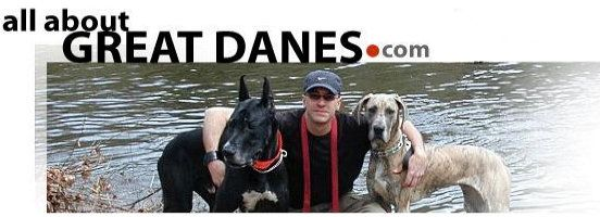 Great Dane Colors, Coat Colors, Patterns and Markings