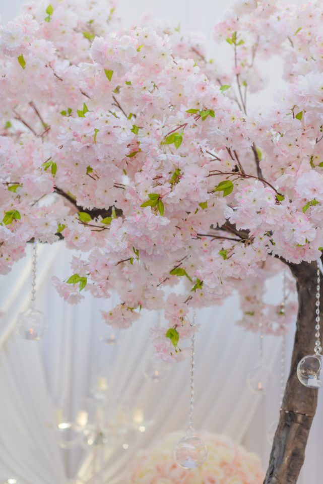 Sakura Blossom Tree Canopy Wedding Lounge Tree Canopy Blossom Trees Hanging Tea Lights