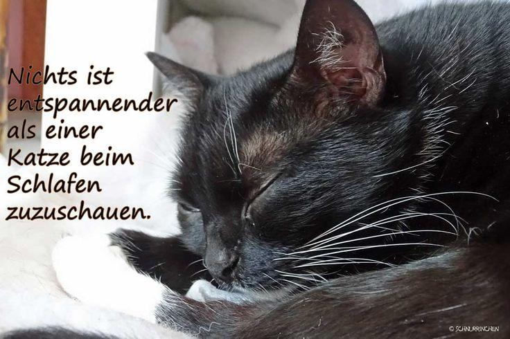 Nichts ist entpannender als einer Katze beim Schlafen zuzuschauen.  Katzenweisheiten Leben mit Katzen