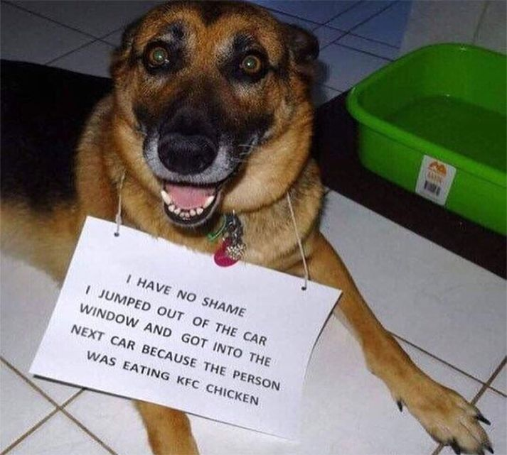 20 Funny Animal Pictures