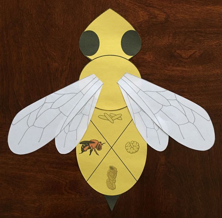honey bee life cycle pdf