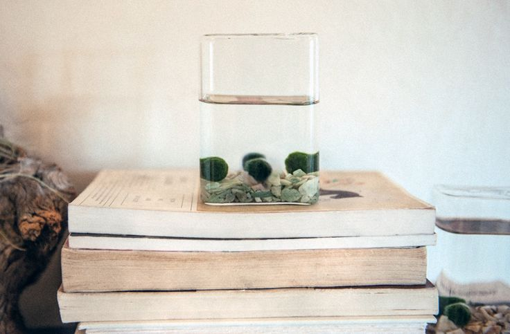 We love Marimo moss balls. Today on the care blog, everything you need to know to keep these mysterious little aquatics thriving!