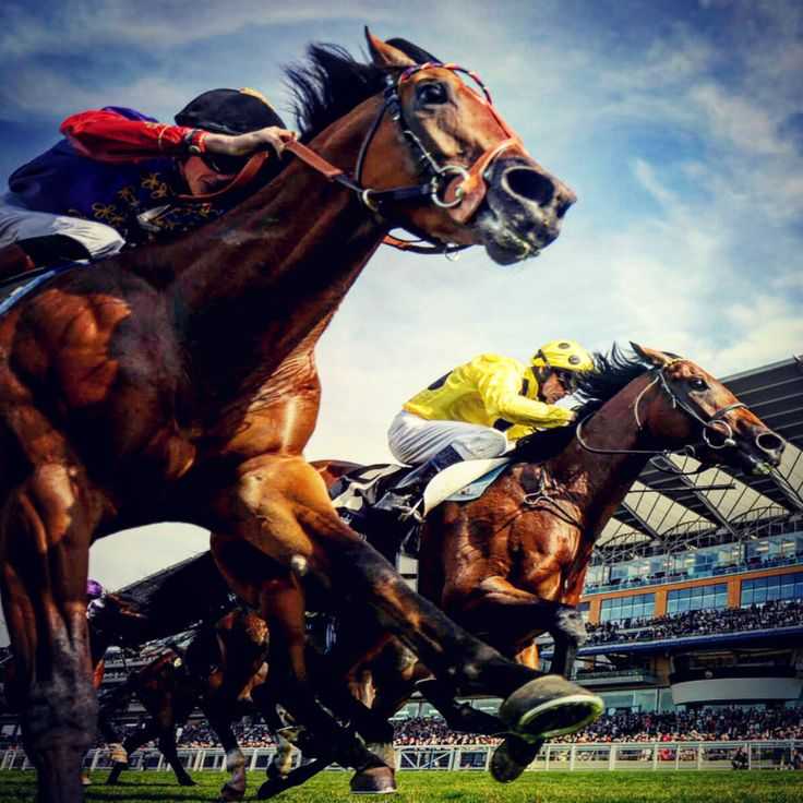 Horse Racing Tips: Today's Races Analysis