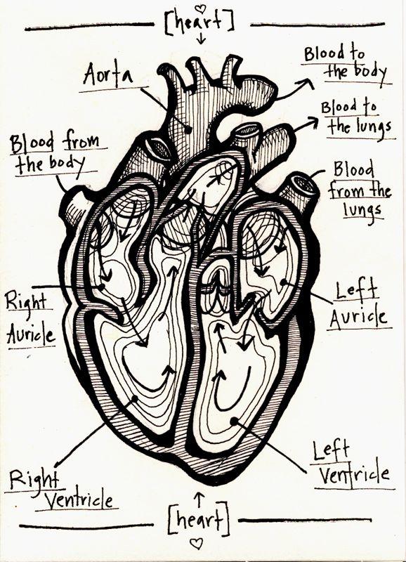 human heart valentine (2012) - Allison Sweeney