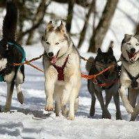 #dogalize Maltrattamento degli animali: protesta contro corsa cani da slitta #dogs #cats #pets