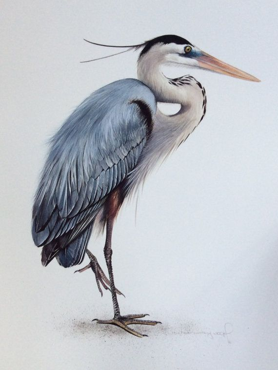 Great Blue Heron by MicheleConleyVogel on Etsy