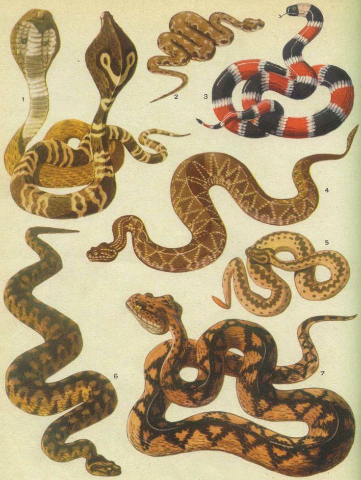 la serpiente, snake