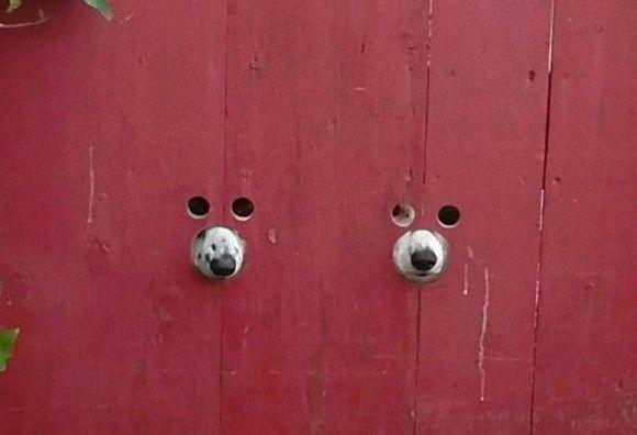 ただならぬ視線を感じたら・・・顔出しパネルに顔突っ込んだみたいな2匹の犬が!! : カラパイア