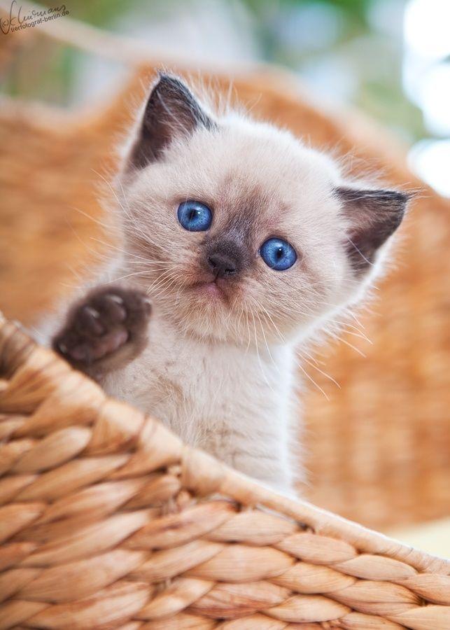 So cute kitten More