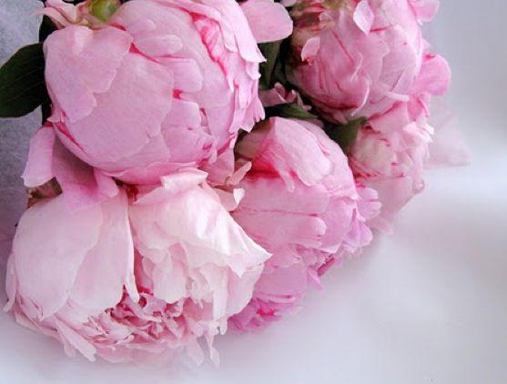 ♥: Pink Flower, Pink Pink Pink, Zsa Zsa Bellagio, Bridal Shower Ideas, Fresh Flower, Jesus Love, Pink Peonies, Favorite Flower, Dreamy Wedding