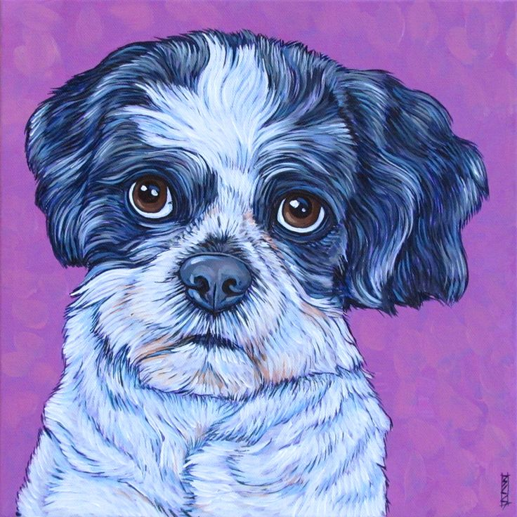 "Rusty the ShihTzu Dog Custom Pet Portrait Painting on 12""x12"" Canvas in Acrylics from PetPortraitsbyBethany.com"