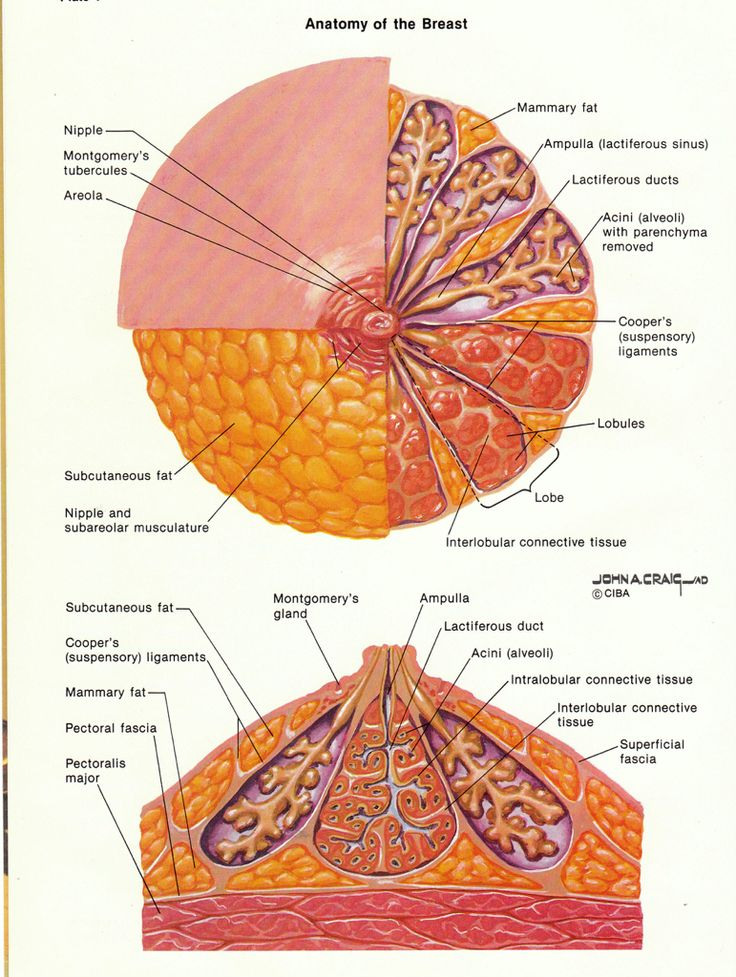 27 best Breast Facts images on Pinterest | Breast, Facts and Truths