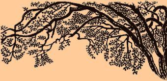 tree.gif 340×165 pixels